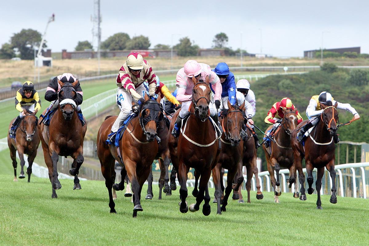 Derby minibus company - horse races 2